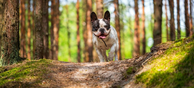 Hund Wald