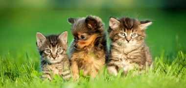 Katzen mit Hund_151592957