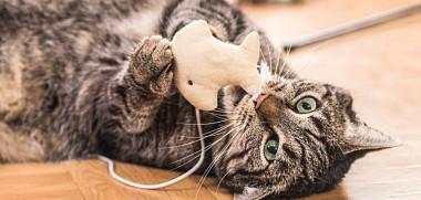 Mit einem Spielzeug spielende Katze