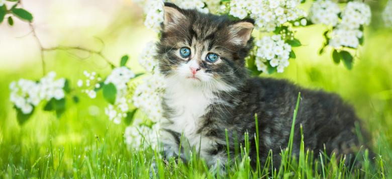 Babykatze Blumen