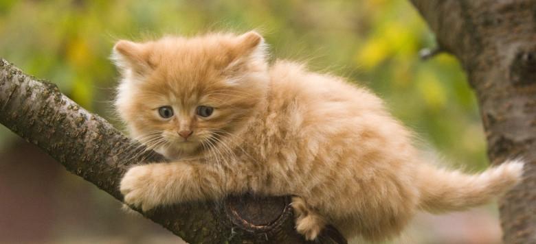 Katze Klettert_31912828