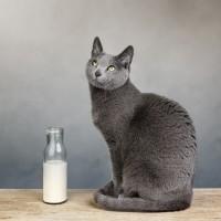 Katze Milch_124270396