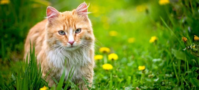 Katze draußen_78616963
