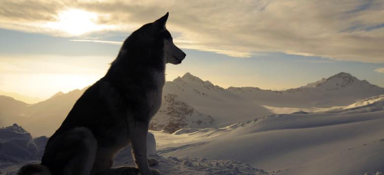 Hund Schnee Berge