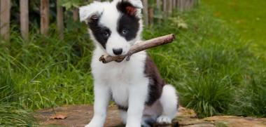 Hund will spielen
