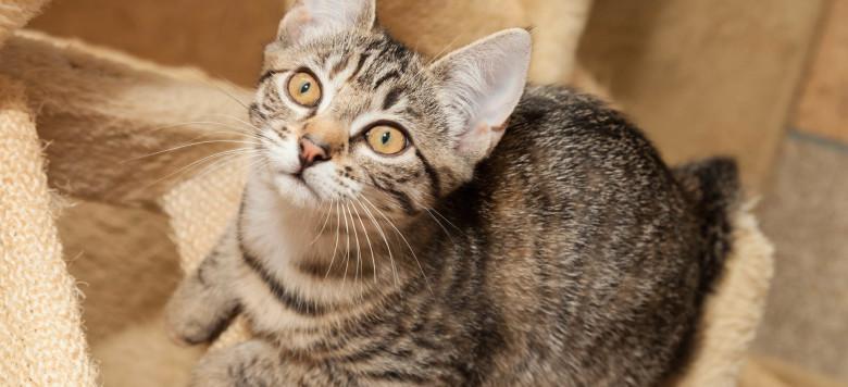 Katze mit Kätzchen auf Baum Möbel Treppe iStock_000076018881_Large-2
