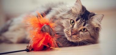 Katze_Spielzeug_265810364