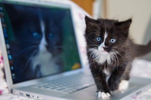 10 life hacks die das leben mit katzen einfacher machen. Black Bedroom Furniture Sets. Home Design Ideas