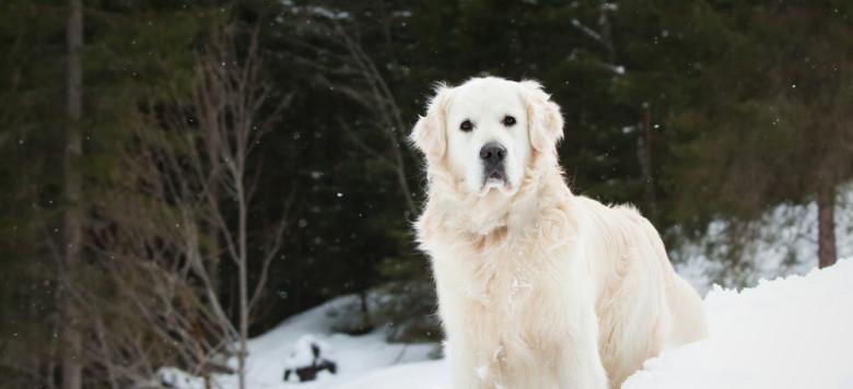 Hund Schnee Wald