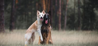 Hunde Freunde_449904511