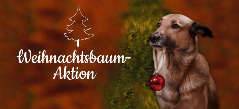 Weihnachtsbaum-Aktion-Banner