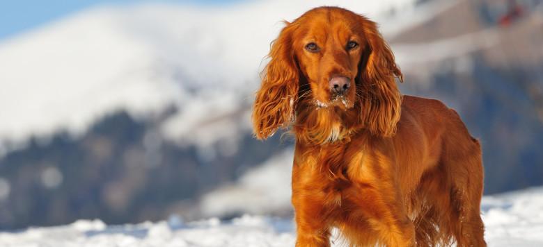 hund-winter_46695232