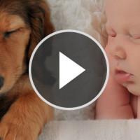 video_beitragsbild1