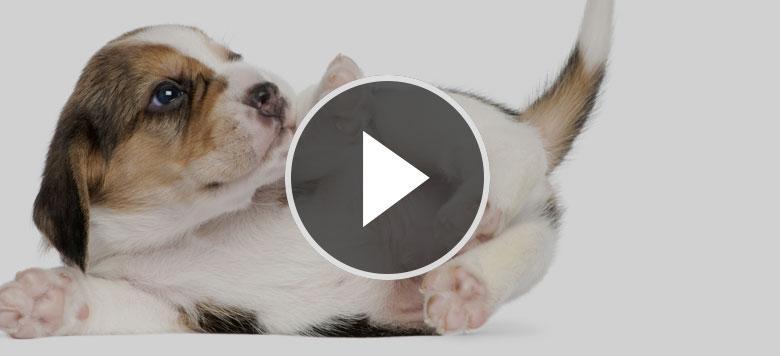 video_beitragsbild3