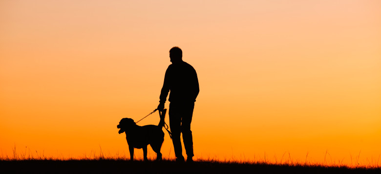 Hund Spaziergang Sonnenuntergang_83837074