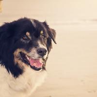 hund_strand_150785132